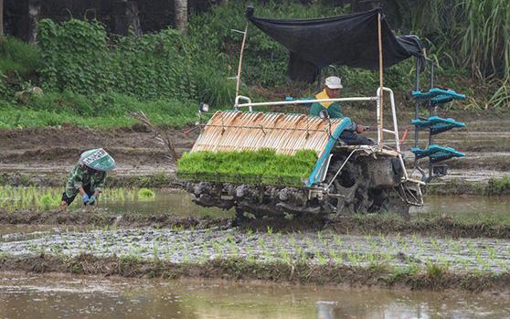 海南琼海水稻机械化育插秧